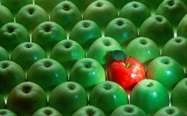 PME Bio : comment gagner en visibilité ?