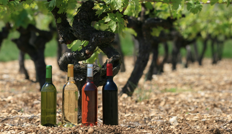 Avant, pendant, après : nos conseils pour une foire aux vins réussie !